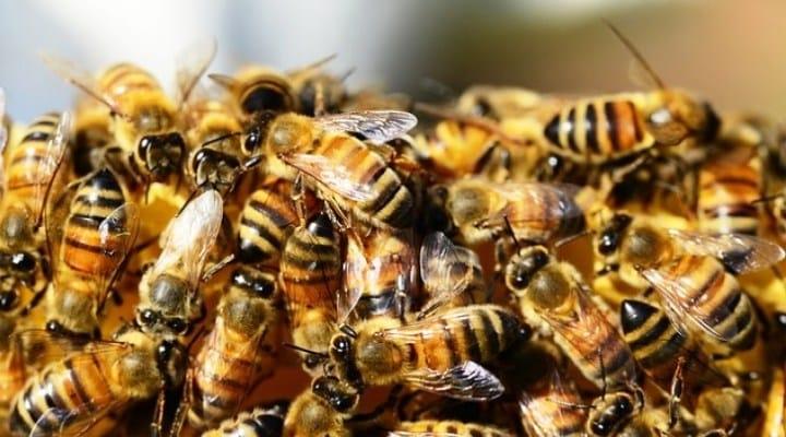Enjambre de abejas acabó con la vida de dos mujeres en el estado Carabobo